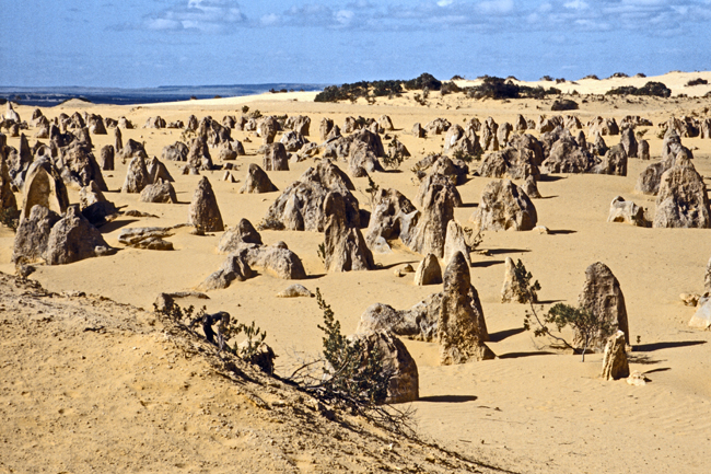 Die 'pinnacles' im Nambung-Nationalpark